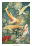 Reflecting Koi II Giclee Print by Megan Meagher