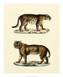 Animal Studies II Giclee Print