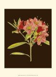 Crimson Blooms IV Prints by Samuel Curtis