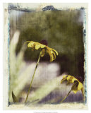 Blackeyed Susans IV Giclee Print by Meghan McSweeney