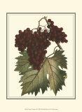 Vintner's Varieties III Prints