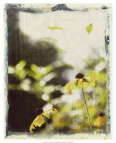 Blackeyed Susans III Giclee Print by Meghan McSweeney