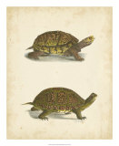 Turtle Duo III Giclee Print by J.W. Hill