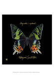 Striking Butterfly II Posters par Ginny Joyner