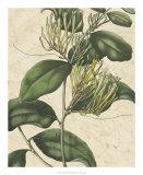 Botanic Beauty IV Giclee Print