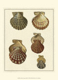 Crackled Antique Shells I Print by Denis Diderot