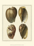 Crackled Antique Shells II Prints by Denis Diderot