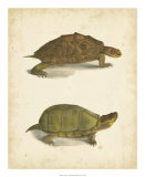 Turtle Duo IV Giclee Print by J.W. Hill