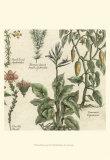 Delicate Garden II Prints