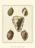 Crackled Antique Shells IV Prints by Denis Diderot