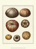 Crackled Antique Shells III Poster van Denis Diderot