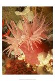 Graphic Sea Anemone I Poster