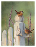 Wrens on Fence Post Prints by Bob Henley