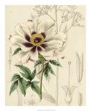 Floral Pairings II Giclee Print