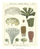 Coral Classification I Giclee Print