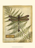 Royal Dragonflies III Prints