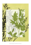 Translucent Wildflowers IV Posters by Jennifer Goldberger