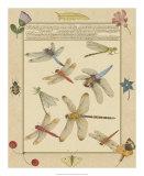 Dragonfly Manuscript IV Posters by Jaggu Prasad