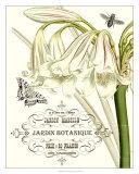 Jardin Botanique I Prints