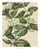 Botanic Beauty III Prints