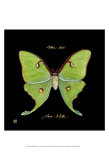Striking Butterfly IV Posters par Ginny Joyner