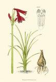 Spring Bounty III Prints by Samuel Curtis