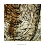 Nature's Textures III Giclee Print