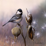 Chickadee and Milkweed Art by Russ Cobane