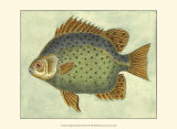Butterfly Fish II Prints by Jennifer Goldberger