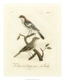 Antique French Birds II Giclee Print by Francois Langlois