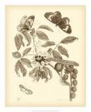 Nature Study in Sepia II Giclee Print by Maria Sibylla Merian