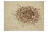 Nesting I Posters par Meghan McSweeney