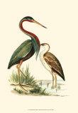 Water Birds III Posters