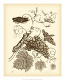 Nature Study in Sepia III Prints by Maria S. Merian