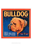 Bull Dog Posters