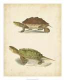 Turtle Duo II Giclee Print by J.W. Hill