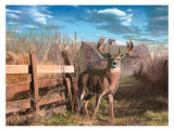 Back Forty Buck Print by Kevin Daniel