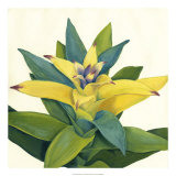 Tropical Bloom II Giclee Print by Megan Meagher