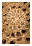 Ammonite I Giclee Print