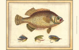 Printed Doug's Crappie Posters