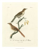 Antique French Birds I Giclee Print by Francois Langlois