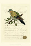 Romantic Dove I Posters