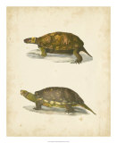 Turtle Duo I Giclee Print by J.W. Hill