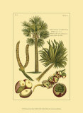 Printed Exotic Palm I Poster by Pierre-Joseph Buchoz