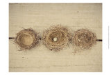 Nesting II Prints by Meghan McSweeney
