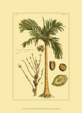 Printed Exotic Palm V Print by Pierre-Joseph Buchoz