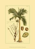 Printed Exotic Palm V Print by Pierre-Joseph Buchoz