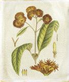 Golden Bough III Giclee Print by Samuel Curtis