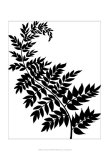 Leaf Silhouette III Prints by Chariklia Zarris