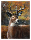 Deer Head II Affiches par Kevin Daniel